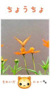 蝶々の観察